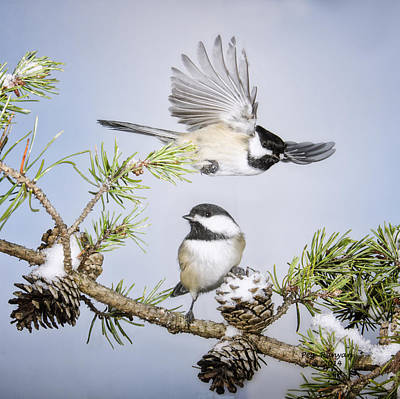 Photograph - Winter Flight by Peg Runyan