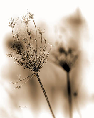 Dried Photograph - Winter Flowers II by Bob Orsillo