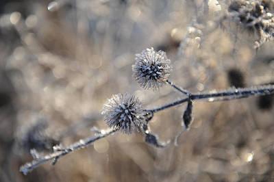Photograph - Winter Flowers by Randi Grace Nilsberg