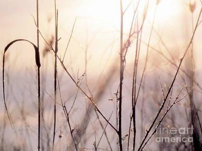 Photograph - Winter Flox by France Laliberte