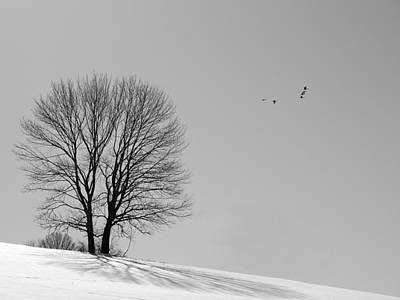 Photograph - Winter - Fly Past In Mono by Richard Reeve