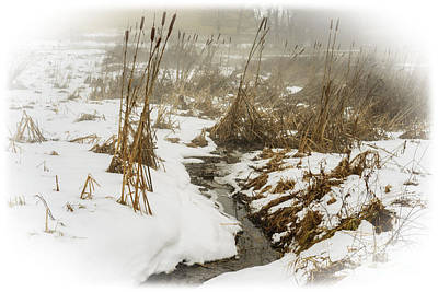 Winter Fog And Cattails Art Print