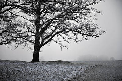 Photograph - Winter Fog by Randi Grace Nilsberg