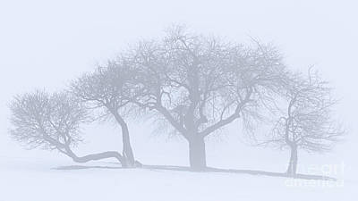 Photograph - Winter Fog Symmetry by Alan L Graham