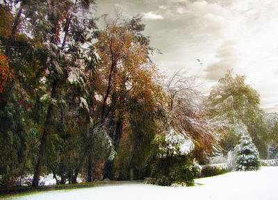 Snowed Trees Digital Art - Winter Foliage by Jessica Jenney