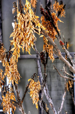 Jerry Sodorff Royalty-Free and Rights-Managed Images - Winter Foliage Old House 13126 by Jerry Sodorff