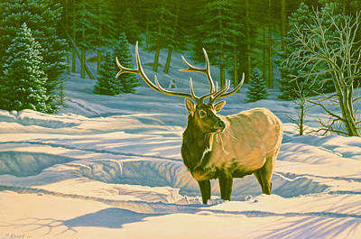 Elk Painting - Winter Forage - Elk by Paul Krapf
