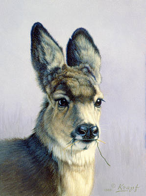 Mule Deer Fawn Painting - Winter Forage-fawn by Paul Krapf