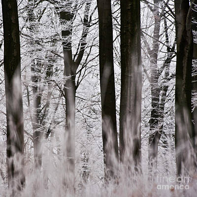 Winter Forest 1 Art Print by Heiko Koehrer-Wagner