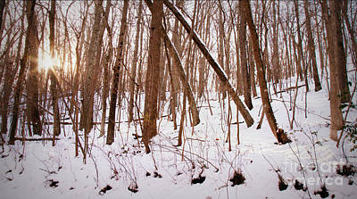 Photograph - Winter Forest by Chris Scroggins
