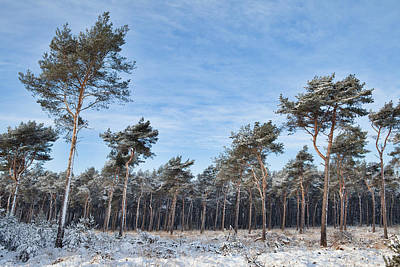 Winter Forest Covered With Snow Art Print by Dirk Ercken