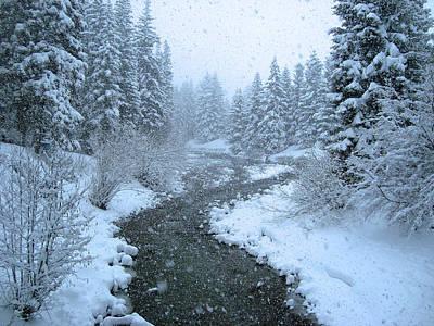 Winter Forest Art Print by David Rucker