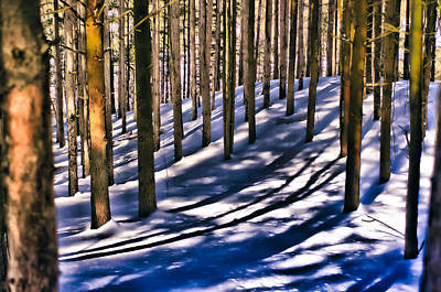 Photograph - Winter Forest by Douglas Pike