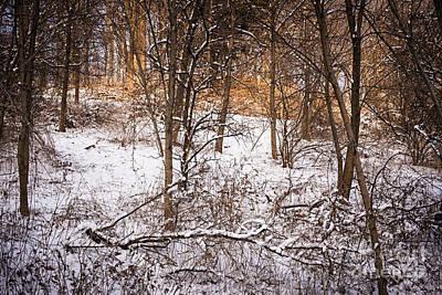 Winter Forest Art Print by Elena Elisseeva