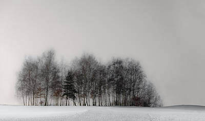 Mist Wall Art - Photograph - Winter Forest by Gilbert Claes