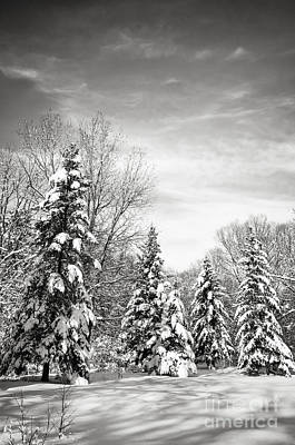 Winter Forest In Black And White Print by Elena Elisseeva
