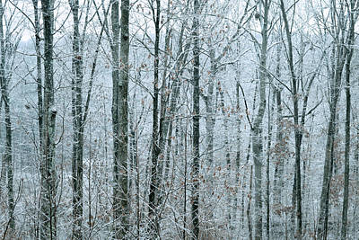 Winter Forest Photograph - Winter Forest by Michelle Ayn Potter