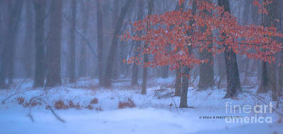 Photograph - Winter Forest by Rima Biswas