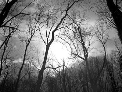 Photograph - Winter Forest by Shawna Rowe