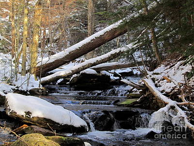 State Love Nancy Ingersoll - Winter Forest Stream by Joshua Bales