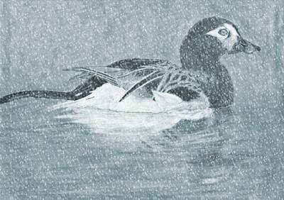 Winter Storm Drawing - Winter Fowl by Mosav Art