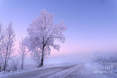 Winter Frost Art Print by Dan Jurak
