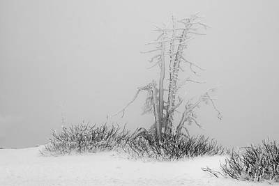 Photograph - Winter Frost by Inge Riis McDonald