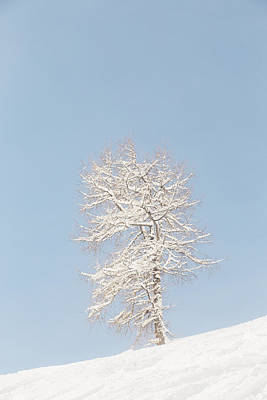 Photograph - Winter Frost by Soren Egeberg