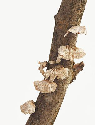 Photograph - Winter Fungi by Jim Zablotny