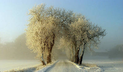 Hoarfrost Photograph - Winter  Gateway by Leif Westling