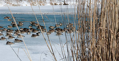 Ice Photograph - Winter Geese - 04 by Larry Jost
