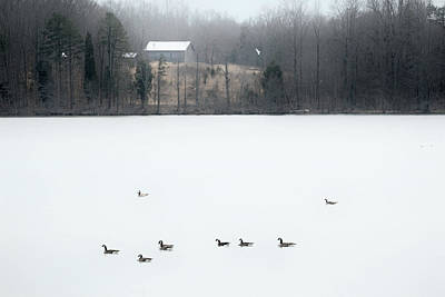 Photograph - Winter Geese 2 C by Patrick M Lynch