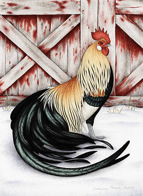 Rooster Drawing - Winter Gold by Katherine Plumer