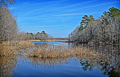 Photograph - Winter Grass Reflections by Linda Brown