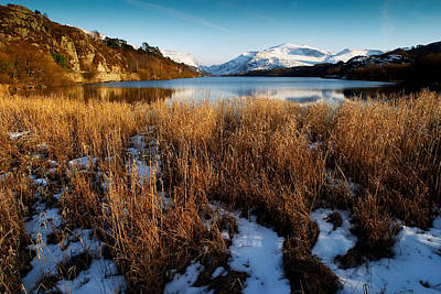 Photograph - Winter Grasses by Peter OReilly