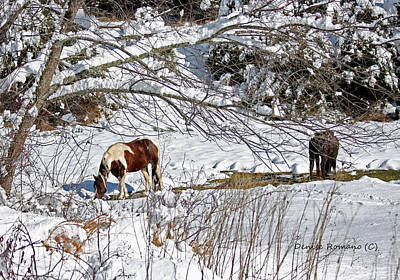 Art Print featuring the photograph Winter Graze by Denise Romano