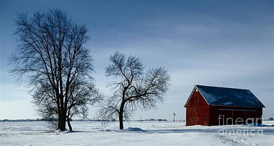 Photograph - Winter Grouping by Tim Good