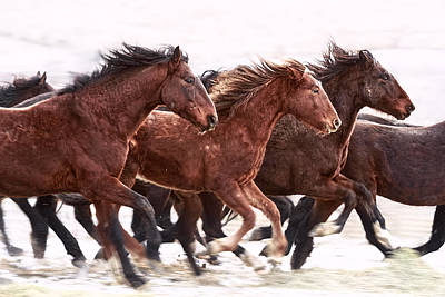Forelock Photograph - Winter Hardened Wild Horses D9247 by Wes and Dotty Weber