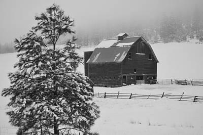 Winter Haven Art Print by Duane King