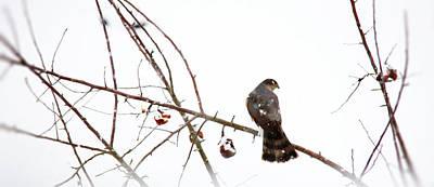 Beautiful Birds Photograph - Winter Hawk by Rebecca Cozart