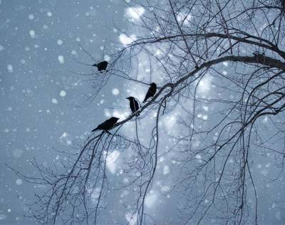 Photograph - Winter Hearts Greeting Card By Gothicolors Donna Snyder by Artists For Altered Cats Cyprus