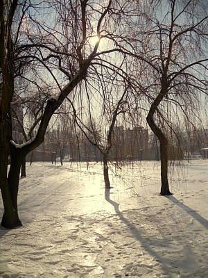 Willows In Winter Art Print by Henryk Gorecki