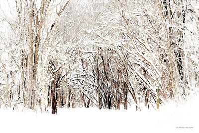 Photograph - Winter Hiking Trail by Barbara McMahon
