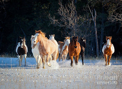 Winter Horses Art Print by Inge Johnsson