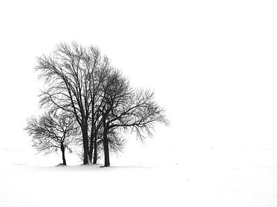 Photograph - Winter Huddle by Tim Good