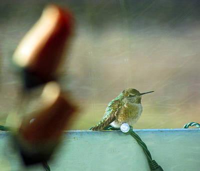 Photograph - Winter Hummingbird by Marie Jamieson