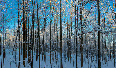 Cold Temperature Photograph - Winter Ice On Trees, New York State, Usa by Panoramic Images