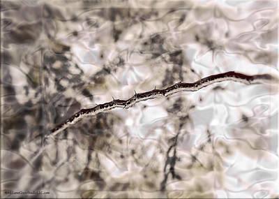 Drip Photograph - Winter Ice Storm Captured Thorns by LeeAnn McLaneGoetz McLaneGoetzStudioLLCcom
