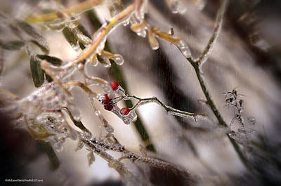 Crystal Photograph - Winter Ice Storm With Red Berries by LeeAnn McLaneGoetz McLaneGoetzStudioLLCcom