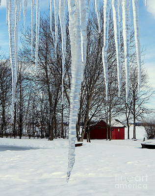 Photograph - Winter Icicles by Rachel Munoz Striggow